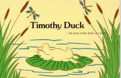 timothy duck